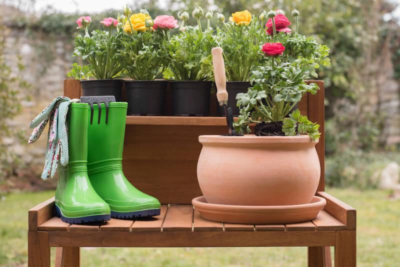 Naturalne Nawozy Dla Kwiatów Doniczkowych Biokurierpl